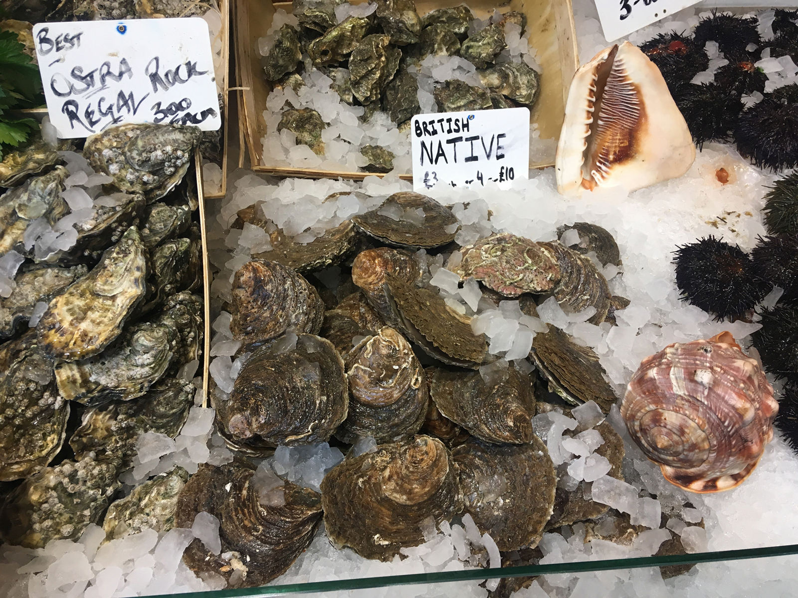 Material research, oyster shells and rock oyster shells