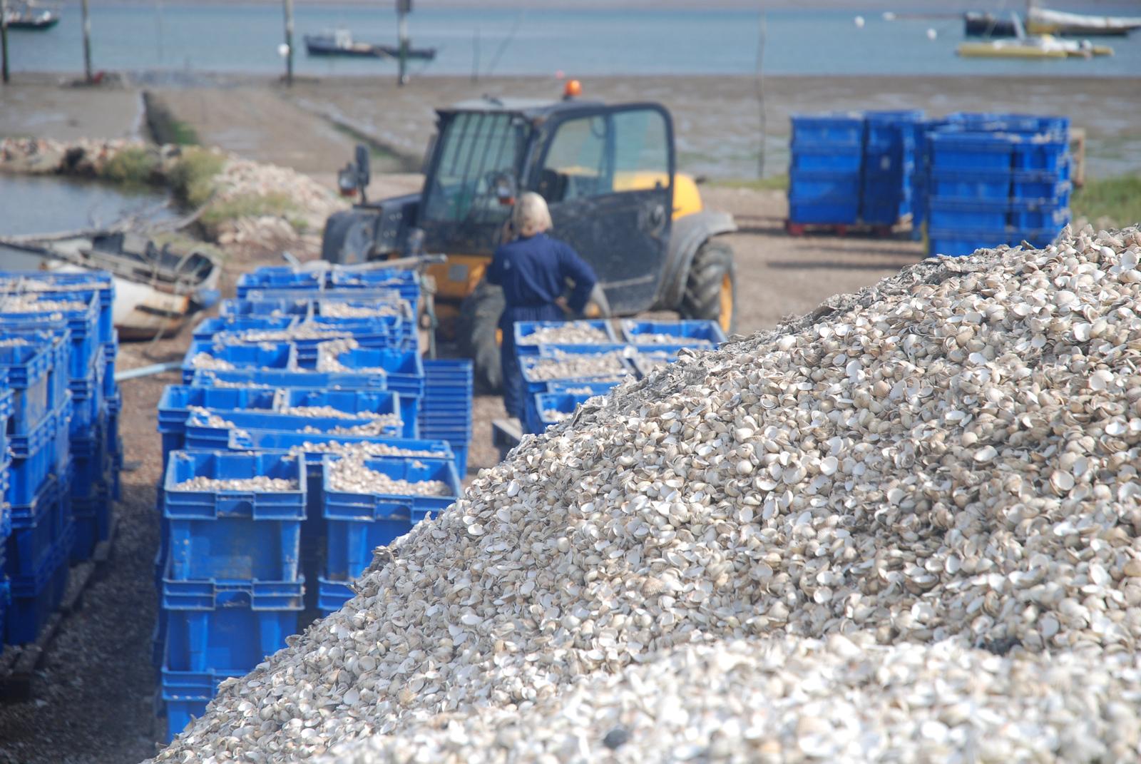 Shellcrete: Transforming Sea Shells Into Low-Carbon Materials