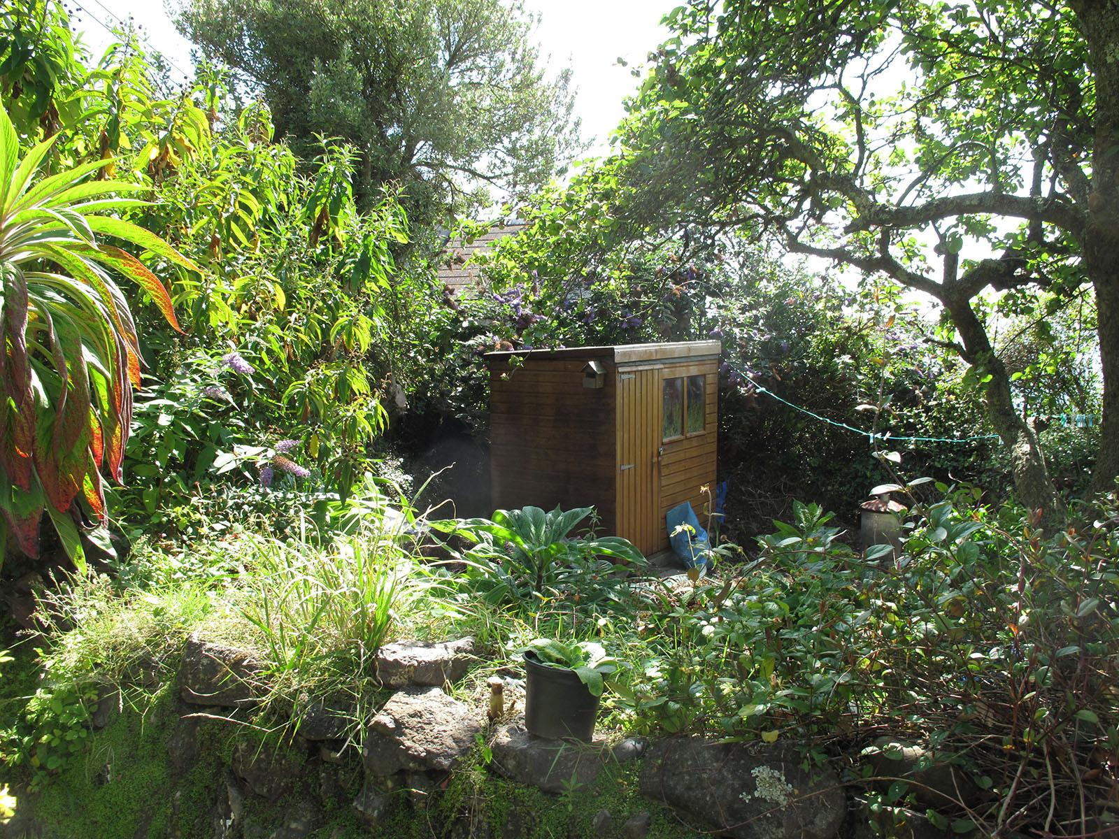Overgrown garden before renovation