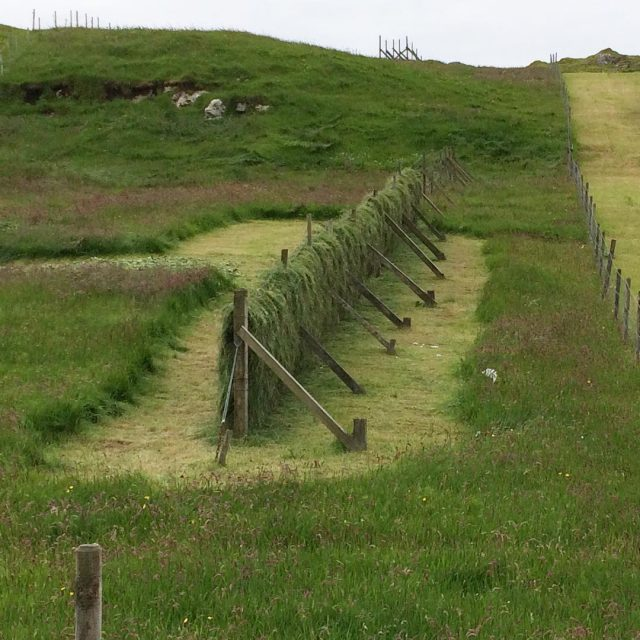Traditional hay drying #faroeislands #landscapearchitecture #traditionalfarming #lwsjournal
